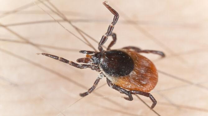 Łagodne zimy nie oznaczają, <br />że będzie więcej komarów i kleszczy